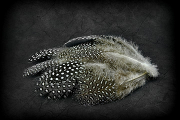 Beautiful feathers on a grunge background