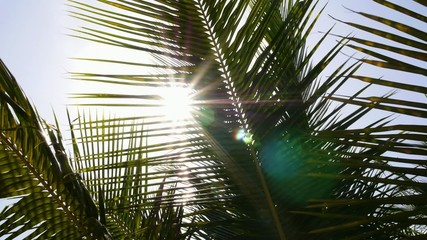 Sun over Green Palm Leaves. Slow Motion.
