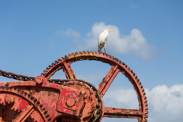 White Crane on Red Gear