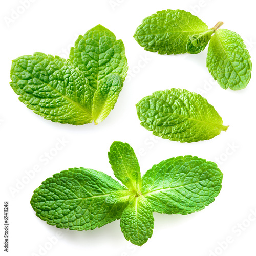 Fresh mint leaves isolated on white background. Collection - 69411246