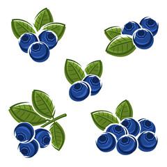 Blueberries set. Vector