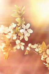 Flowering branch - blooming tree