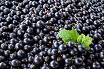 Heap of black currant. Textured background