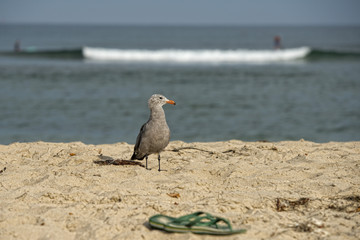 seagull on sandy beach