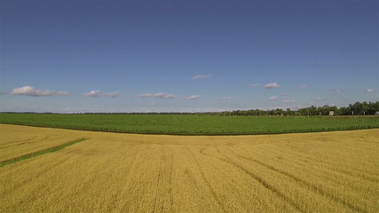yellow Yellow field of wheat.  Aerial rear fly landscape