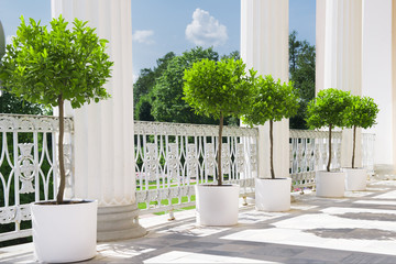 White summer terrace with potted plant near railing. Garden view