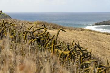 Praia na ilha de Fernando de Noronha Brasil
