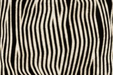 Fur Animal Textures, Zebra small