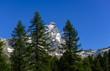 Il Cervino visto dai boschi di Valtournenche