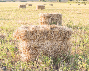 тюк соломы в поле