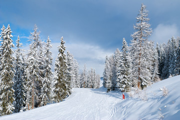 Beautiful winter landscape with fir trees