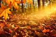 Leinwanddruck Bild - Lichtstrahlen auf Waldboden im Herbst