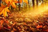 Fototapety Lichtstrahlen auf Waldboden im Herbst