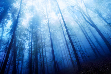 Blaue Nebelstimmung im Wald