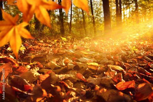 Leinwanddruck Bild Lichtstrahlen auf Waldboden im Herbst