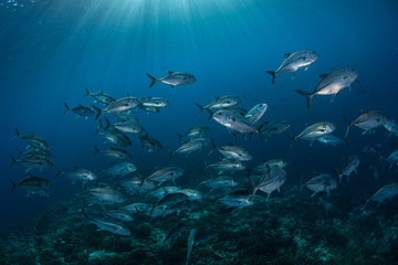 Sunlight and Schooling Fish