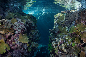 Shallow Pacific Reef 1