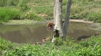 Bears, Mammals, Zoo Animals, Wildlife