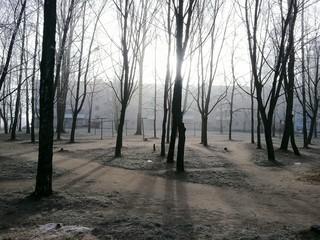 Городское морозное утро