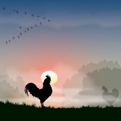 Faune - Coq à l'aurore