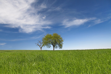 Field,trees and blue sky