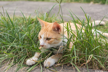 Cat lying on the grass.