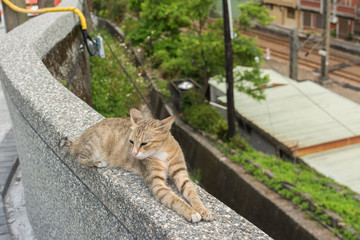Cat lying on the wall.