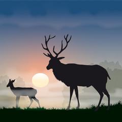 Faune - Cerf à l'aurore