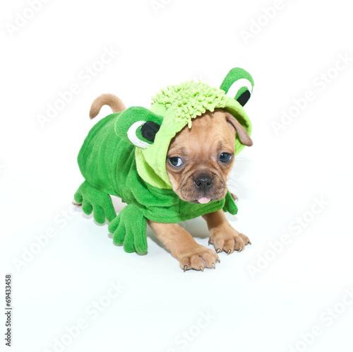 Tuinposter Kikker Frogger Puppy