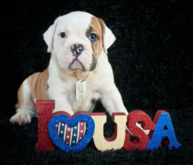I Love U.S.A.
