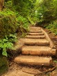 Old wooden stairs in overgrown forest garden, tourist footpath.