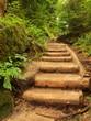 Old wooden stairs in overgrown forest garden, tourist footpath.
