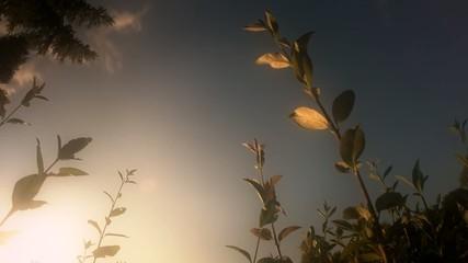 Wolken Hecke Pflanzen Sonnenuntergang Abend