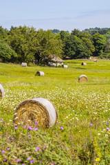Round straw bales in summer field.