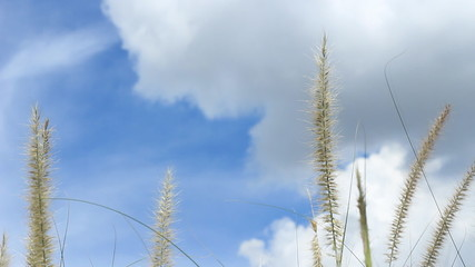 Wind on grass and blue sky
