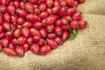 dog rose fruits on jute - DSC1657