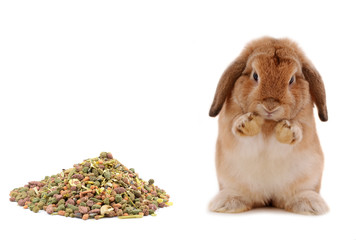 rabbit in  Food isolated on a white background