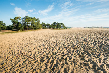 Large sandy nature reserve early in the morning