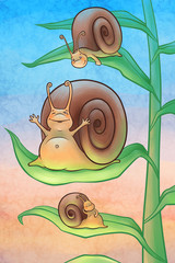 Snails in the morning
