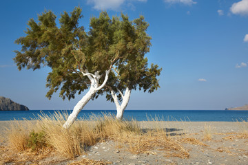 Trees and Mediterranean sea at sunrise in Plakias. Crete. Greece