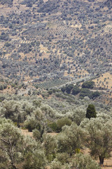 Amari valley in Crete with trees and road. Greece