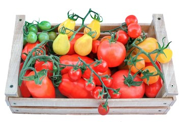 Multicolored Tomatoes in Wooden Box