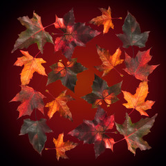 Colorful autumn background with maple leaves.