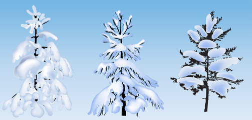 three firs and pines in snow on blue background