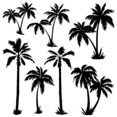 Palms Silhouettes