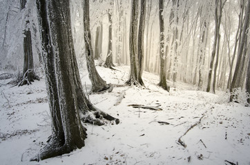 sunlight in a forest with frozen trees in winter