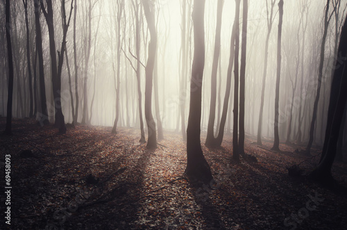 forest with sun rays shining through trees © andreiuc88
