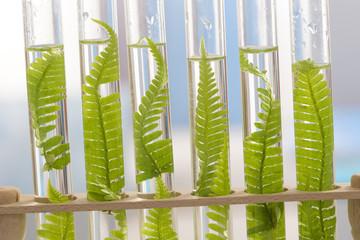 Biologie- Culture en laboratoire