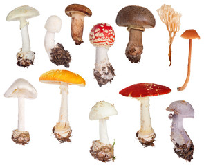 set of twelve toadstools isolated on white