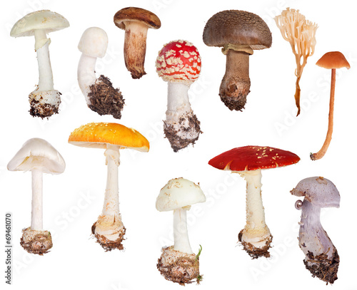 set of twelve toadstools isolated on white - 69461070